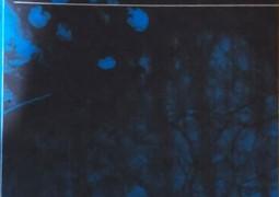 Kıyı (şiir)- Dost Körpe